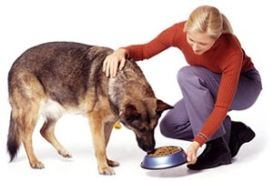 Feed Your Dogs Once Or Twice A Day